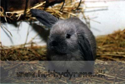 hvad gør kaninerne